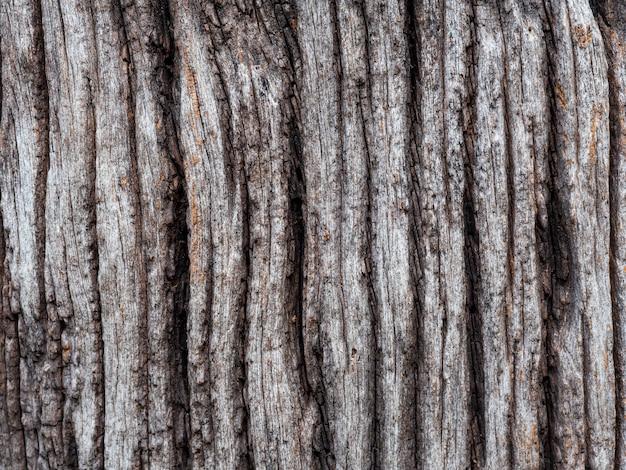 Tekstura skamieniałego drewna