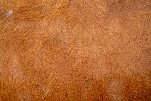 Tekstura skóry brązowej krowy. rolnictwo. gładka powierzchnia.