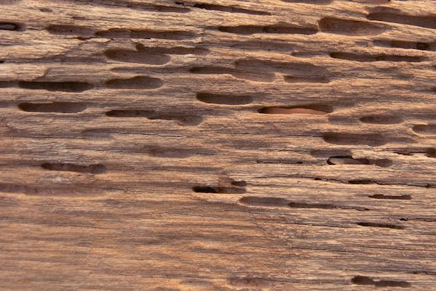 Tekstura śladów termitów je drewno