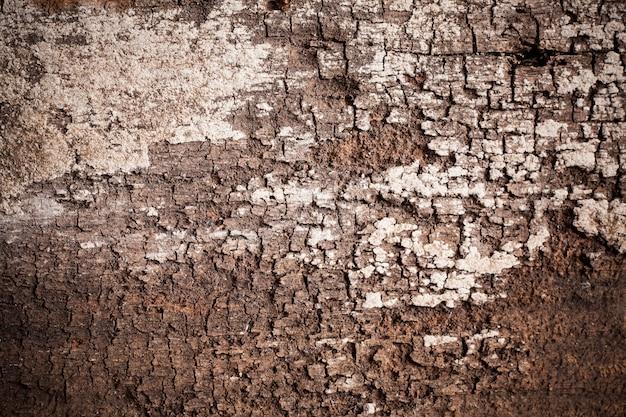 Tekstura starego drewna tła.