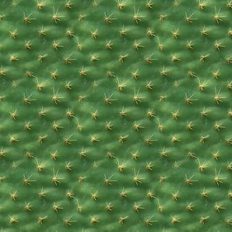 Tekstura. struktura liścia kaktusa jako tło lub tapeta