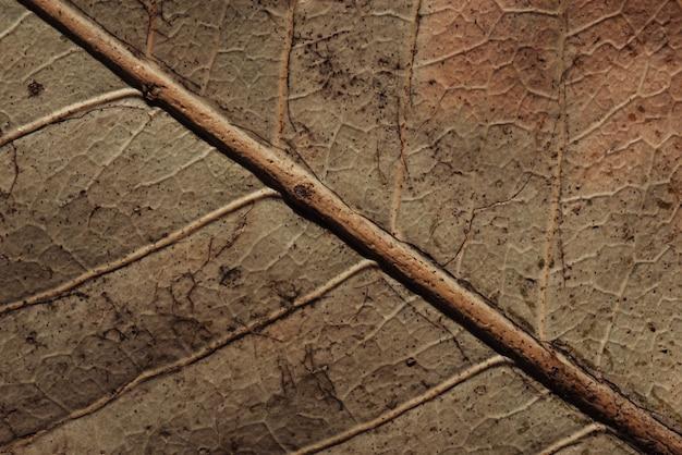 Tekstura suchy liść