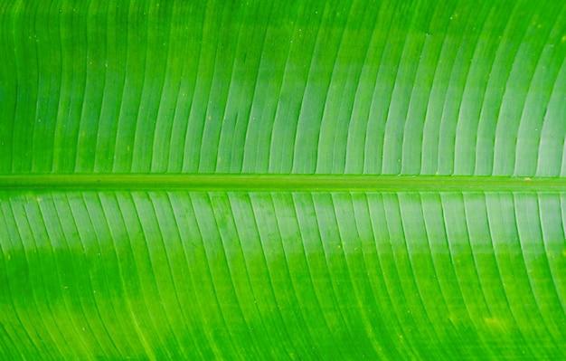 Tekstura tła liści palmowych