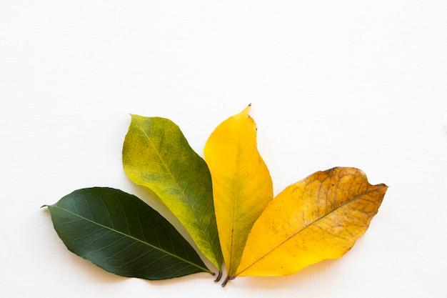 Tekstura tła natura liść świeża zieleń zmienia się aż do wysuszenia jesienią