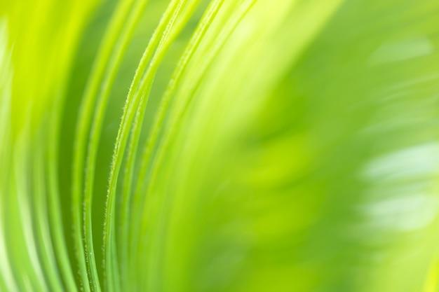 Tekstura tła zielonego liścia struktura makrofotografii