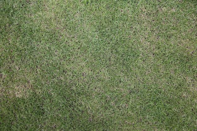 Tekstura tła zielonej trawy
