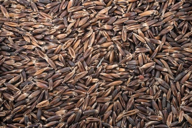 Tekstura tło nasion owsa