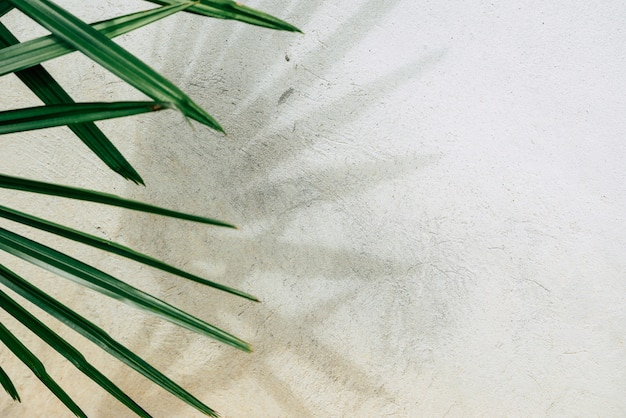 Tekstura tło z cieniami liści palmowych na betonowej ścianie