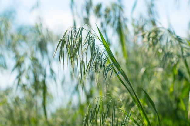 Tekstura tło zielona trawa