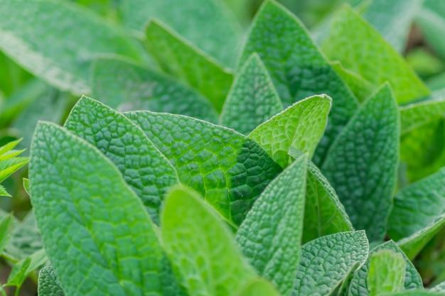 Tekstura tło zielone liście. zbieranie rosnących liści