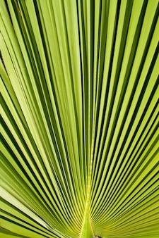 Tekstura tło zielony liść palmy. góra widoku
