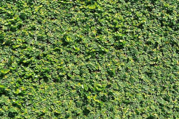 Tekstura tło zielony ściana drzewa roślin