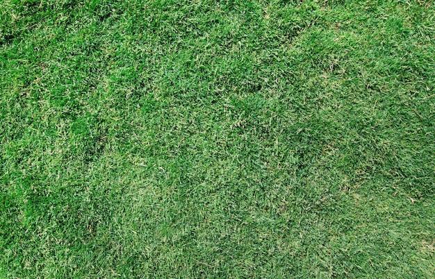 Tekstura trawy z tła pola