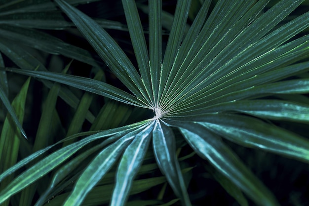 Tekstura tropikalnych liści palmowych, ciemnozielone liście, natura obraz tła