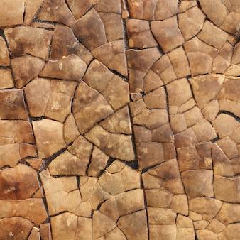 Tekstura twarde owoce (tykwa) używane jako płytki dekoracyjne