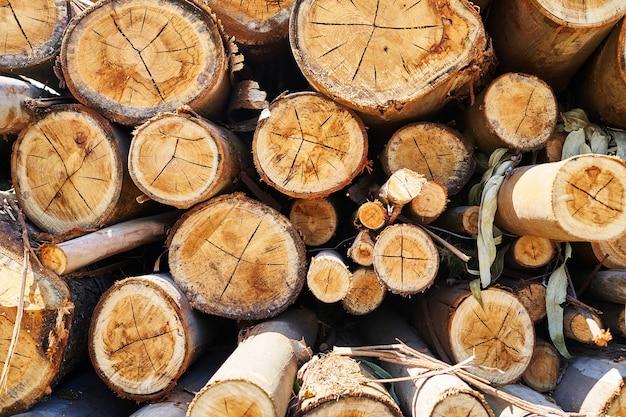 Tekstura ułożonych kłód wyciętych w lesie. koncepcja wylesiania. tło.