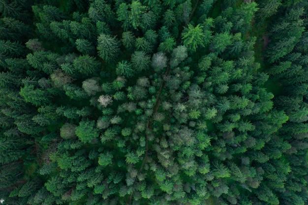 Tekstura widok lasu z góry, widok z lotu ptaka góry lasu, zdjęcie panoramiczne nad szczytami lasu sosnowego
