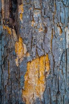 Tekstura wykorzystania kory drewna jako naturalne tło