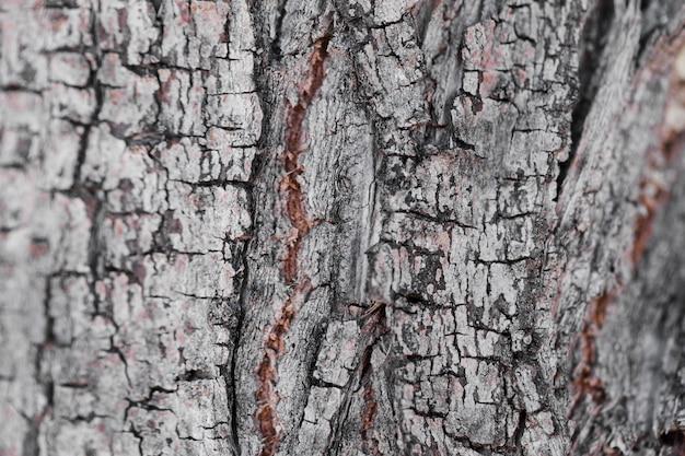 Tekstura zakończenie w górę drewna