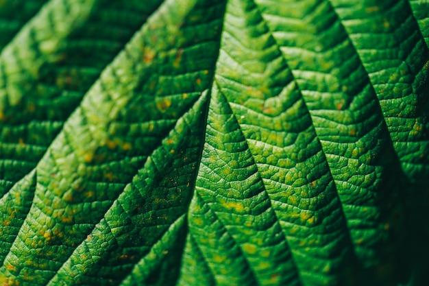 Tekstura zielonego liścia makro- fotografia