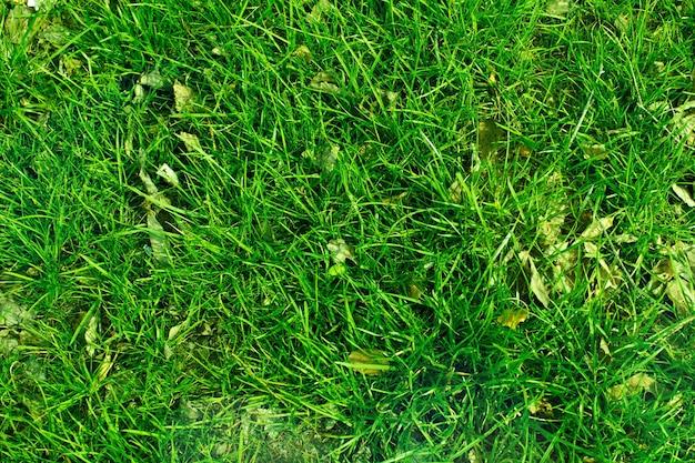Tekstura zielonej trawy