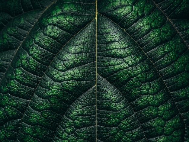 Tekstura zielony liść. zielony natury tło.