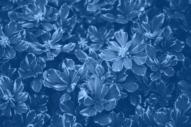 Tekstura zielonych liści. modny niebieski i spokojny kolor. tropikalny liść w monochromatycznym koloru tle.