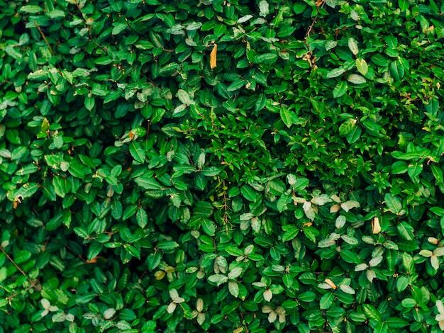 Tekstura zielonych liści pełne krycie ramki naturalny tex
