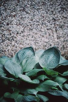 Tekstura zielonych liści. tropikalny liść tło.
