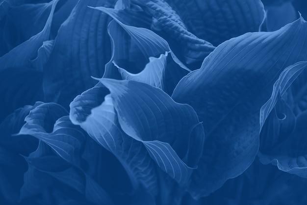 Tekstura zielonych liści. tropikalny liść w monochromatycznym koloru tle. modny niebieski i spokojny kolor.