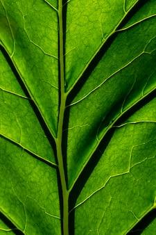 Tekstura zielonych liści