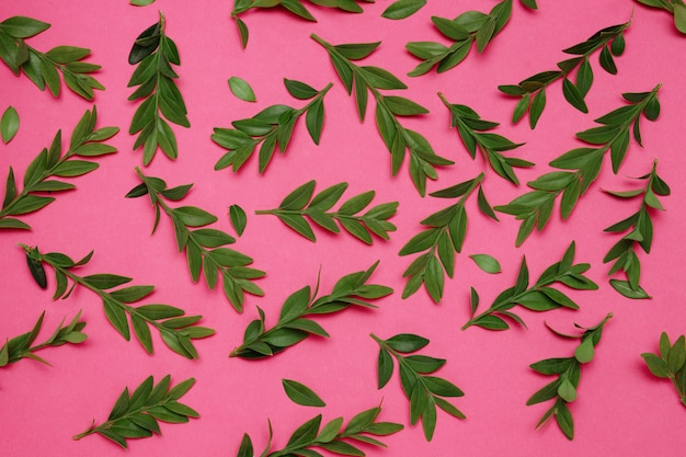 Tekstura zielonych roślin na różowym tle