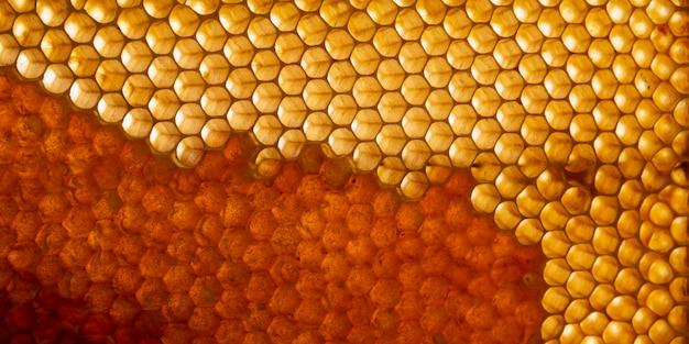 Tekstura żółty plaster miodu