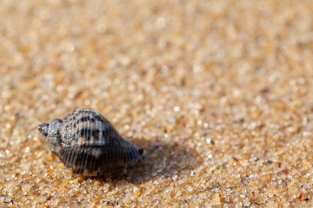 Teksturowane mokre piasek plaża tło