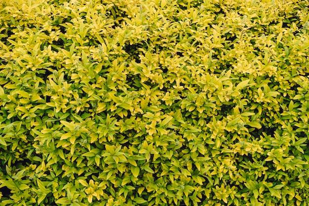 Teksturowane naturalne tło wielu zielonych liści