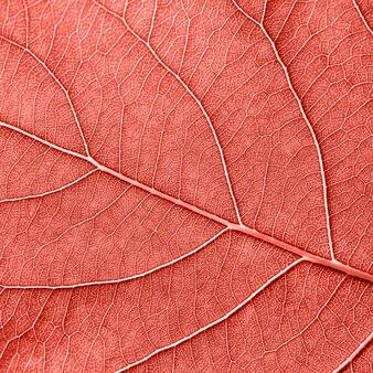 Teksturowane naturalne żyłkowane tło wzór liści dla układu. modny modny kolor living coral. fotografia makro. widok z góry