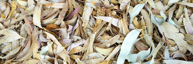 Teksturowane tło sterty suchej zwiędłych opadłych liści jesienią drzew.