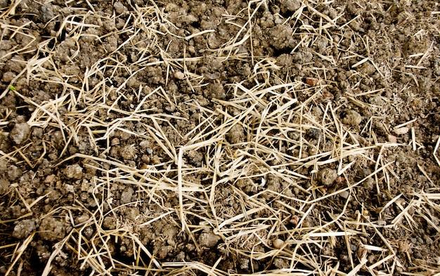 Tekstury gleby i suchej trawy