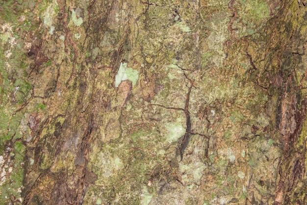 Tekstury kory drzewa na tle