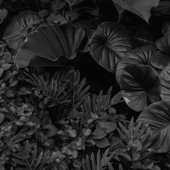 Tekstury naturalnych abstrakcyjnych czarnych liści na tle tropikalnych liści czarno-białych obrazów