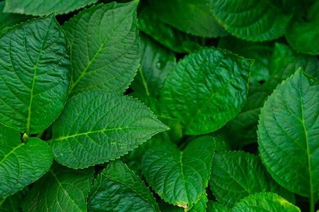 Tekstury tło zielony urlop