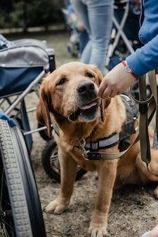 Terapia psów canisa. labrador pies i niepełnosprawne dzieci na zielonej trawie