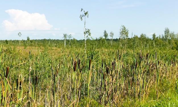 Teren podmokły latem, na terytorium rosną rzadkie drzewa i dużo wysokiej trawy i trzcin, letni krajobraz
