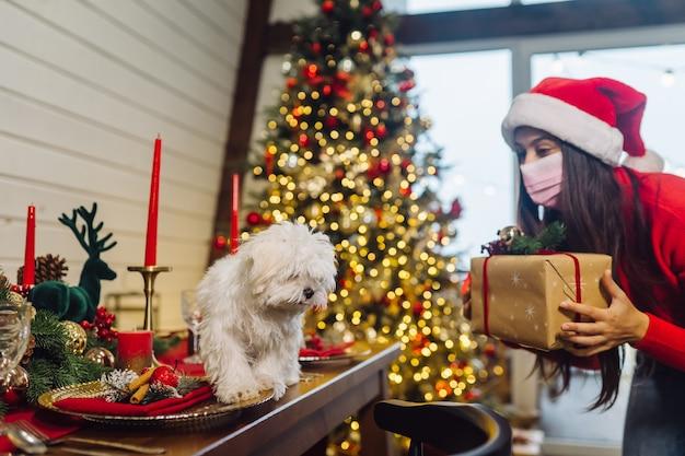 Terier na świątecznym stole, dziewczynka stoi z boku i trzyma prezent