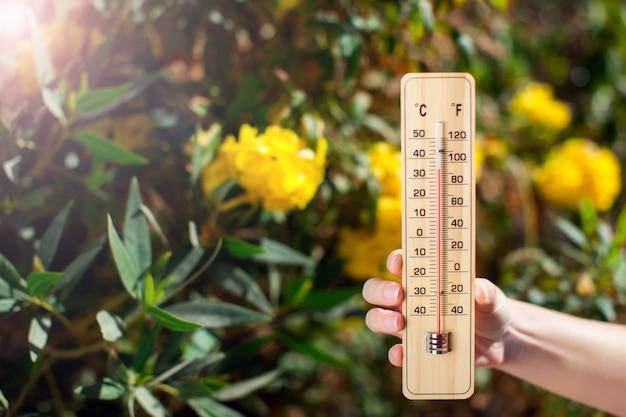 Termometr obok drzew z żółtymi kwiatami. prognoza pogody i koncepcja lato