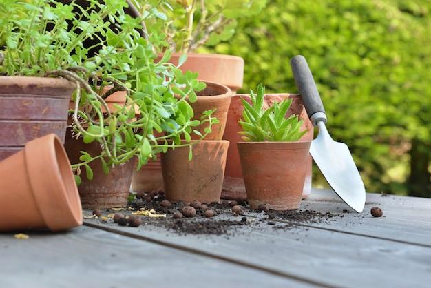 Terra cotta doniczki z roślinami i łopatą na stole w ogrodzie