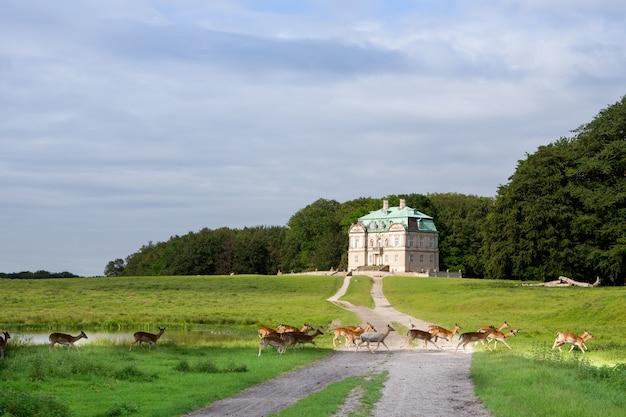 The hermitage, królewski domek myśliwski w klampenborg w danii. dyrehaven to park leśny na północ od kopenhagi