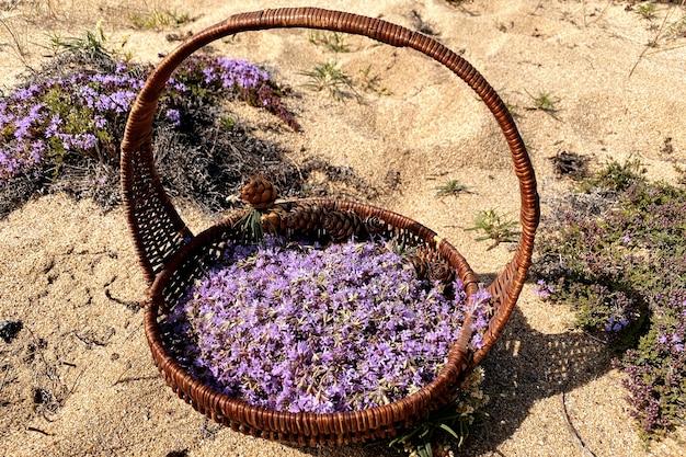 Thymus serpillum kwiaty w koszyku