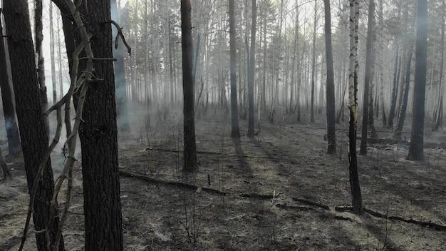 Tlący się z czasem mały pożar w lesie.