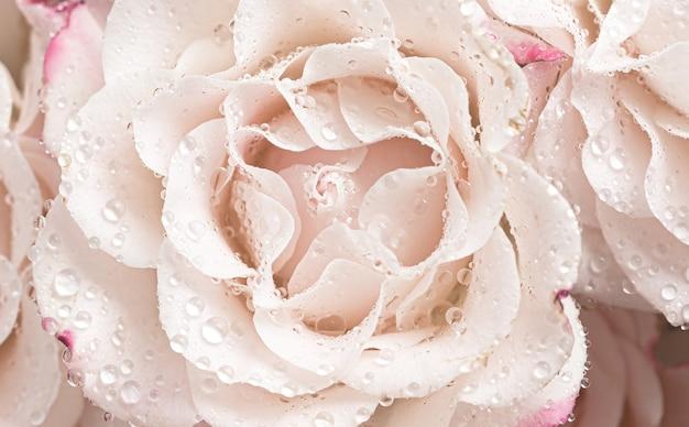 Tle kwiatów. jasnoróżowe róże z kroplami wody